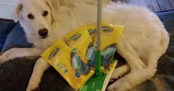 Swiffer_pet_lovers