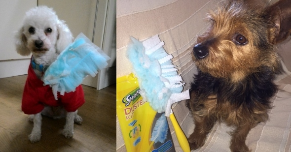 swiffer_pet_lovers6